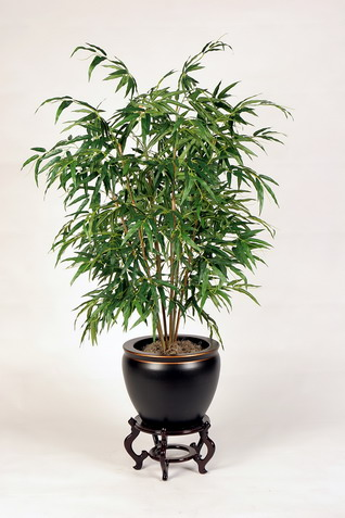 House plants a breath of fresh air homedecorindianity for Low maintenance air purifying plants